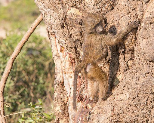 Tanzania 062.jpg