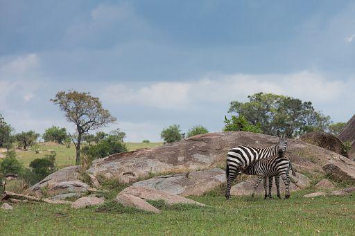 Tanzania 415.jpg