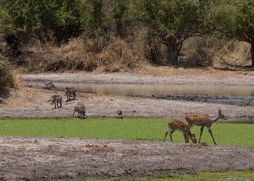 Tanzania 1 400.jpg