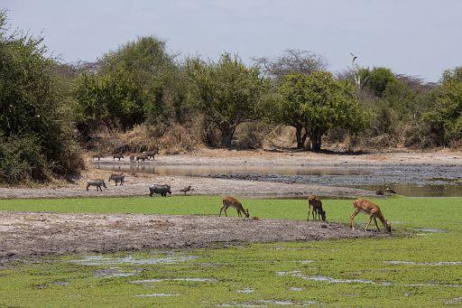 Tanzania 1 402.jpg