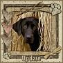 dcd-Update-In The Hay