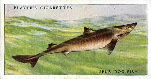 1935 Player Sea Fishes #06 (1)