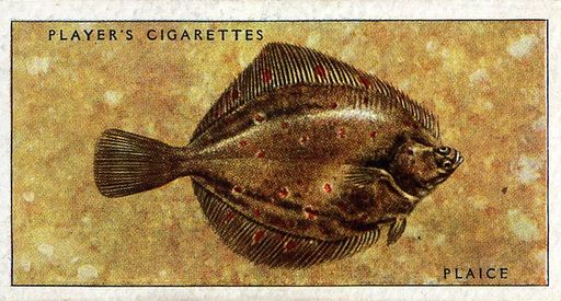 1935 Player Sea Fishes #46 (1)