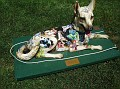 2005 - DOG DAZE - ANIMAL ALPHABET FANTASY.jpg