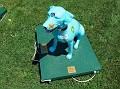 2005 - DOG DAZE - PAWS FOR PEACE.jpg