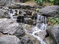 LA Arboretum - Meyberg Waterfall10