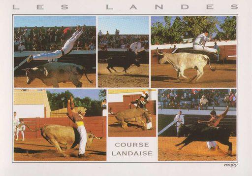 Course Landaise NF (40)