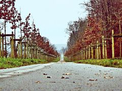 Radweg Fürstenallee