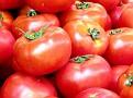 Tel Aviv Large tomatoes 2012